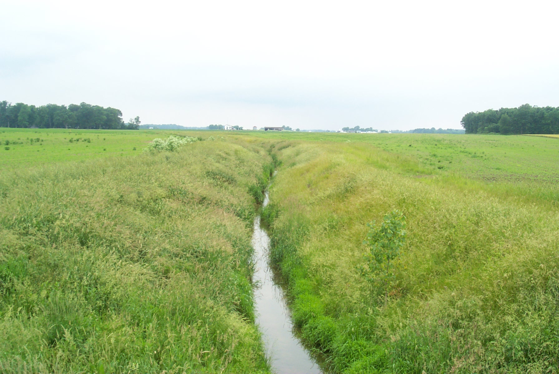 filterstrip, filterstrip with water in it in an open field